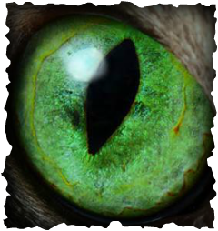 Green Eyed Monster Pic