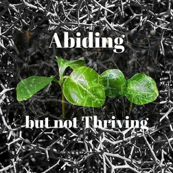 Abiding But Not Thriving Article